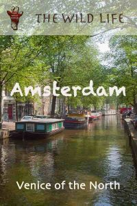 Have you ever visited the Venice of the North? Read my Amsterdam Travel Tips and get all information to plan your trips to Amsterdam like a local. You will learn which is the best area to stay in Amsterdam, attractions for adults and for kids with food guide, and a lot more.