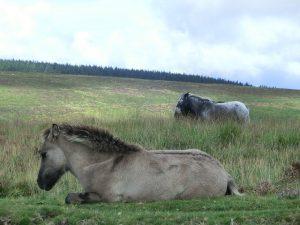 UK Self-Drive Holidays to the Dartmoor National Park.