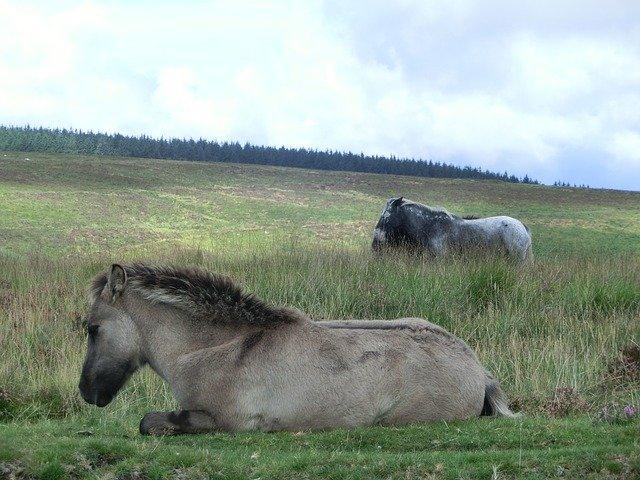 Dartmoor National Park. Self-drive UK tours.