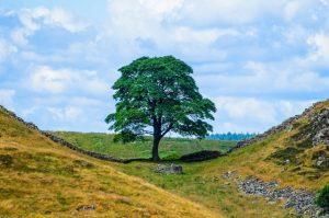Hadrian's Wall at Northumberland National Park