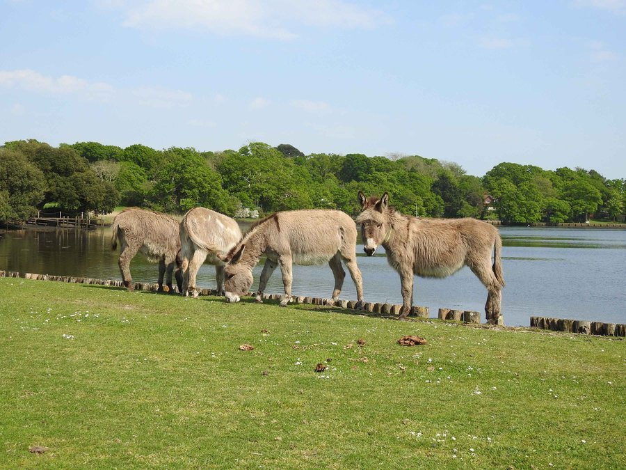 New Forest National Park. National Parks near London. UK self-drive tours. new forest family holidays. new forest log cabins for hire. forest retreats uk. np park. forest lodge holidays uk.
