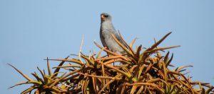 Best Camera For Birding. best superzoom camera for birding. best point and shoot camera for birding.