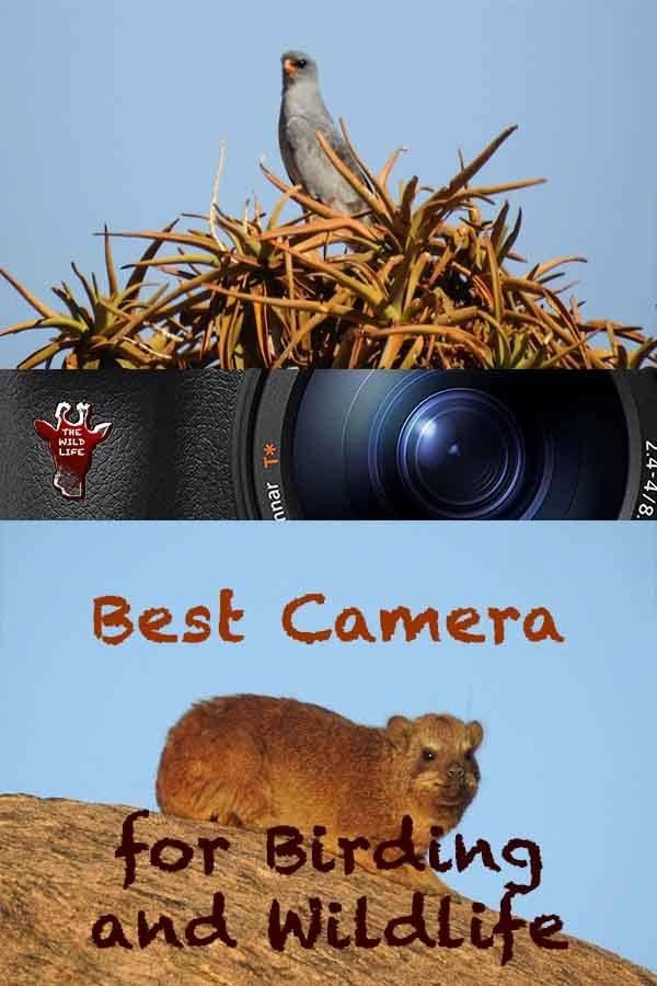 Best Camera For Birding And Wildlife
