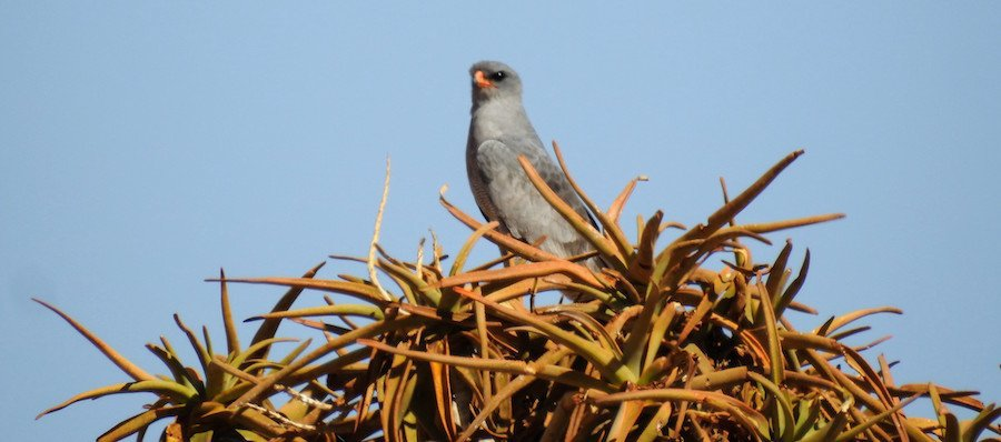 Best Camera For Birding